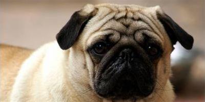 教你自製狗狗減肥大餐