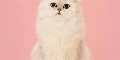 貓咪身上的毛團要怎麼解開