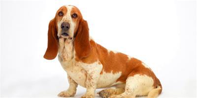 狗狗飼養:如何診斷犬腫瘤