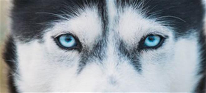 常見狗狗皮膚病有哪些?