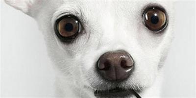 寵物狗該不該吃雞肝?