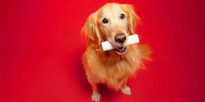 如何訓練狗狗謝謝