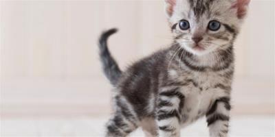 貓的錢癬是什麼?