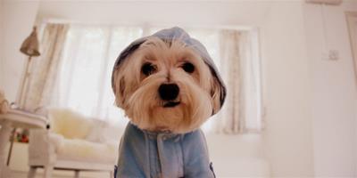 狗狗的飲食禁忌您瞭解多少