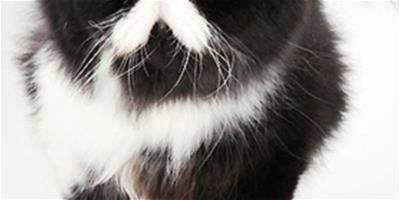 貓咪呼吸不暢怎麼辦?什麼原因?