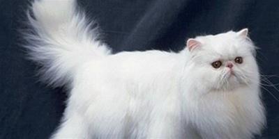 貓咪喜歡亂跑怎麼辦?為什麼小貓喜歡亂跑?