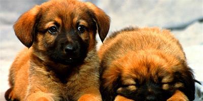 狗狗的追蹤訓練