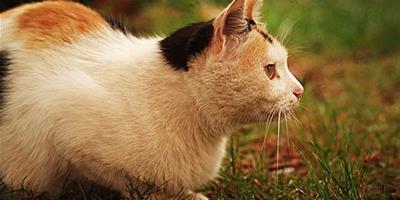 貓癬是什麼?