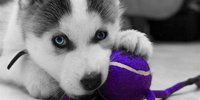揭曉寵物主人對幼犬的管理方法