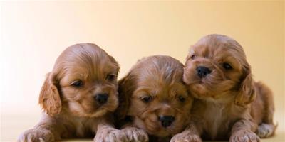 幼犬日常訓練注意事項