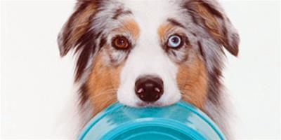 邊牧犬自製狗糧不可缺少的4大肉類食品