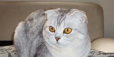 貓咪獨自在家要注意哪些問題