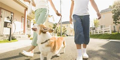 遛狗必備的6種用品
