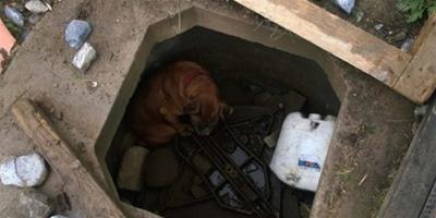 因無法繼續繁殖幫主人賺錢,可憐狗狗被狠心遺棄在洞窟中