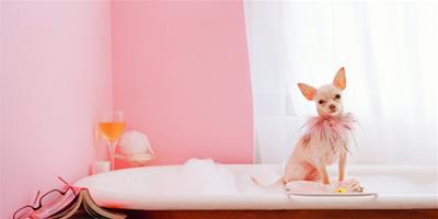 給寵物狗剃腳毛的原因是什麼