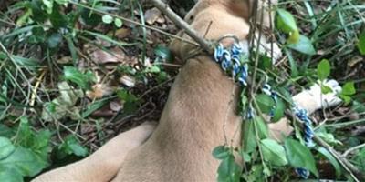 美國女獸醫虐待寵物狗致死 獲刑4個月