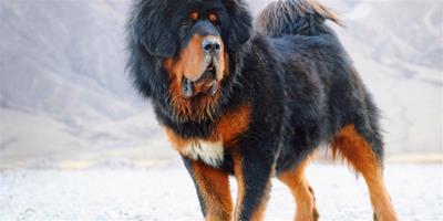 寵物健康:小狗發燒的症狀