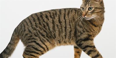 寵物大全:貓咪輸液治療異常及併發症的應對措施