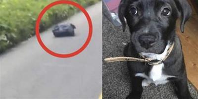 黑色垃圾袋被丟路中扭動打開看...小狗睜著大眼搖尾巴