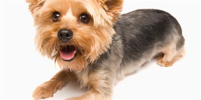 在訓練狗狗的時指令和獎勵的意義