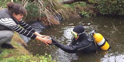 英動物愛好者在深海潛水夫幫助下順利找到寵物龜