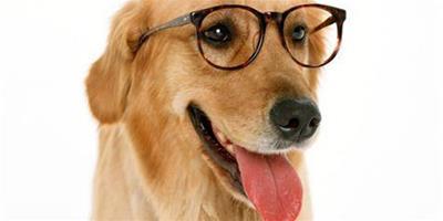 趣味IQ測試,狗狗性格特點測試