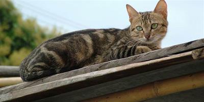 分辨顏色對貓咪捕獵有幫助嗎?