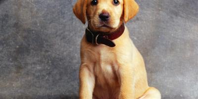 怎麼訓練狗狗轉圈