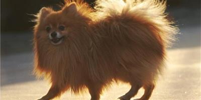 怎麼保證狗狗營養均衡?