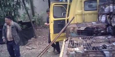 偽愛貓人士每天領養幾十只貓,當看到他的倉庫後所有人都哭了