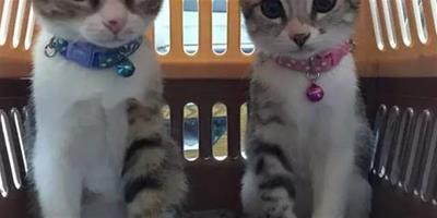 貓哥哥和貓妹妹坐姿會不會有區別?