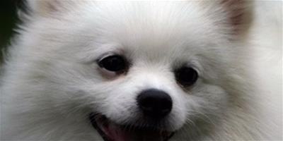 【方法】怎麼看狗狗有沒有蟲?