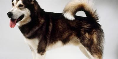 狗狗社會化訓練的重要性