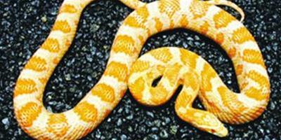 英女子餓死寵物蛇被判終身不得養寵物