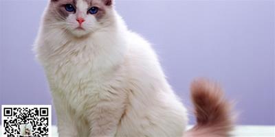 訓練貓養成不跳上床的習慣