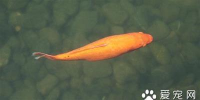 魚藥大全 選擇使用魚藥所需要的注意事項