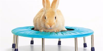 兔子散步需要注意什麼 要注意下列幾點要求