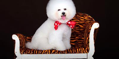 寵物狗雪天裡的美容方法
