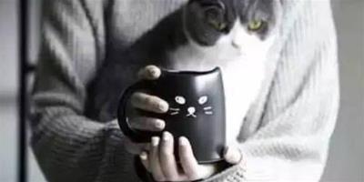 八種貓咪消瘦原因以及解決方法