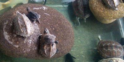 養龜的必備設備有哪些?
