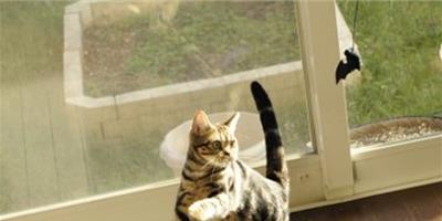 室內養貓要注意環境衛生