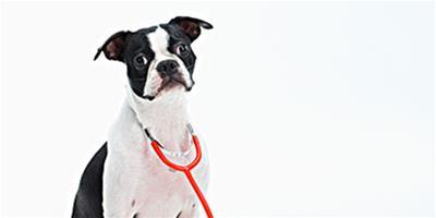 養狗家庭必備的小藥箱