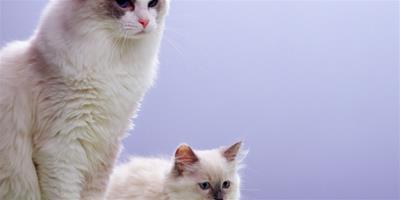 如何給貓咪挑選好的抓板