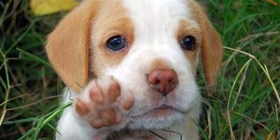 為何狗狗會喜歡吃草?