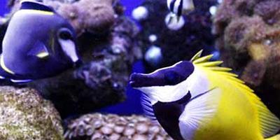 外形美觀漂亮的觀賞魚有哪些?
