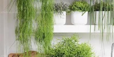 室內植物9種巧妙搭配,看一眼就中毒