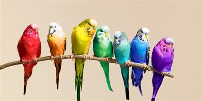 常見鸚鵡的4類主食介紹