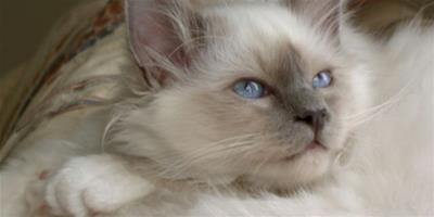 貓咪心情不好怎麼辦?