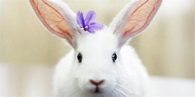 養兔要注意勤觀察