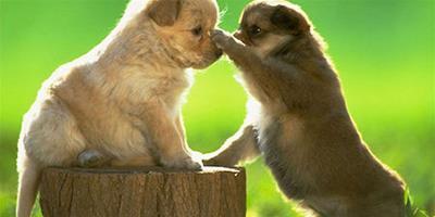 狗狗討厭什麼味道 刺激性比較大的氣味